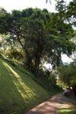 大结构树和在公园的一条小径 免版税库存照片