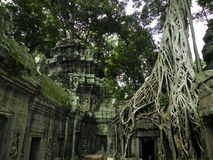 大结构树 库存图片