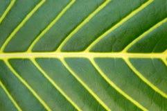 大绿色叶子宏指令工厂 库存照片