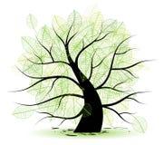 大绿色叶子老结构树 库存照片