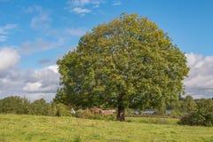 大绿色树和蓝天 免版税库存图片