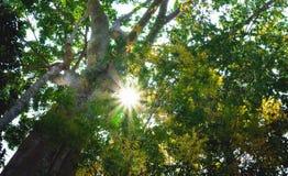 大绿色树在有午间阳光的公园 免版税库存图片