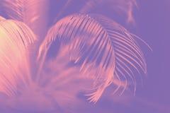大绿色棕榈叶和阴影 库存图片