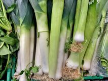 大绿色白的韭葱特写镜头健康菜 免版税库存照片