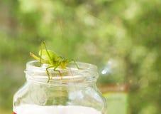 大绿色蚂蚱坐玻璃瓶子 免版税库存图片