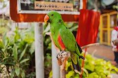 大美丽的五颜六色的鹦鹉 库存照片