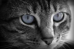 大美丽的灰色眼睛 免版税库存图片