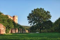大老橡树和城堡废墟 免版税库存照片