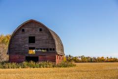 大老被风化的退色的红色谷仓 免版税库存图片