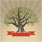 大老结构树 图库摄影