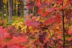 大胆的秋天叶子 库存照片
