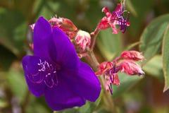 大胆的紫色和桃红色热带花 免版税库存图片