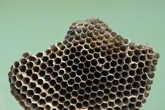 大胡蜂巢 库存图片