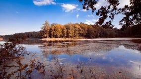 大自然湖在晴朗的夏天午间的森林与深蓝天,仍然浇灌表面,自然全景背景照片 库存照片