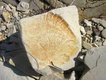大自然石头 库存照片