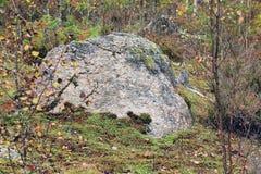 大花岗岩石头在森林里 库存照片