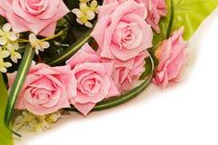 大花束查出空白的玫瑰 免版税图库摄影