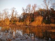 大草原全国野生生物保护区沼泽 免版税库存图片