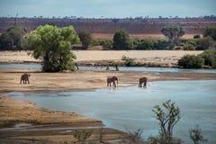 大草原公园的惊人的看法在肯尼亚 免版税库存照片