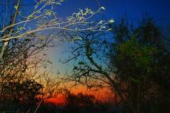 大草原和巴西人Sertão的颜色 图库摄影