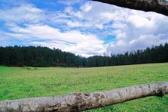 大草原喜欢大草原 库存照片