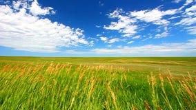大草原在恶地国家公园 影视素材