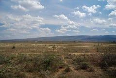 大草原在肯尼亚非洲 免版税图库摄影