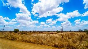 大草原地区的风景在克留格尔国家公园 库存照片