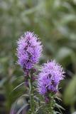 大草原快乐羽毛-多种花色鲜明之植物 免版税库存照片