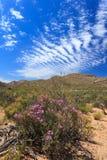 大草原森林风景和蓝天在开普敦 免版税库存照片