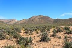 大草原森林风景和蓝天 免版税库存照片