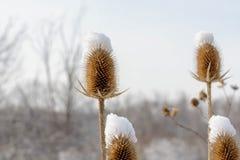 大草原植物特写镜头在冬天 图库摄影
