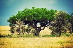 大草原横向在非洲, Serengeti,坦桑尼亚 库存图片