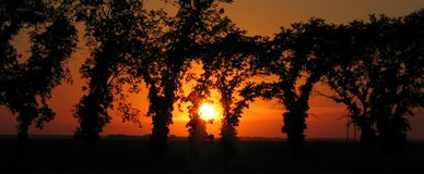 大草原现出了轮廓日落结构树 图库摄影