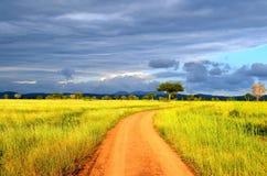 大草原的本质 图库摄影