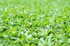 大草原草或冻结的草地背景  库存图片