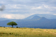 大草原- Murchison Falls NP,乌干达,非洲 库存照片