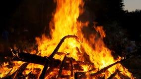 大营火背景从分支烧伤的在森林慢动作的晚上 股票视频