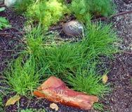 大蒜、香葱和莳萝草本在庭院里 免版税库存照片