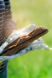 大蒜和新鲜的草本橄榄油长方形宝石在铝芯 免版税库存图片
