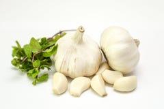大蒜和新鲜薄荷在白色背景 库存图片