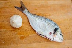 大蒜和mahi-mahi (海豚鱼) 免版税库存照片