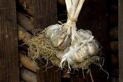 大蒜存储 图库摄影