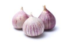 大蒜或葱属ampeloprasum var ampeloprasum 库存图片