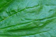 大蕉叶子片断的绿色植物生长的纹理  库存照片