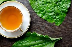 从大蕉的芳香有机自然清凉茶离开 库存照片
