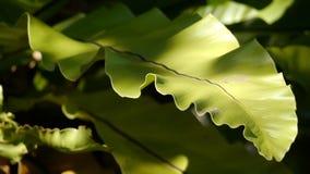 大蕨在庭院里 免版税库存照片