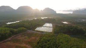 大虾农厂与通风系统的种植园事业 Phang Nga,泰国 慢动作的HD 股票视频
