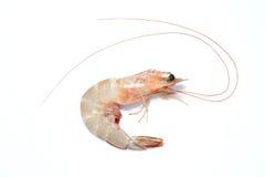 大虾虾 免版税库存图片