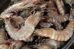 大虾 库存图片
